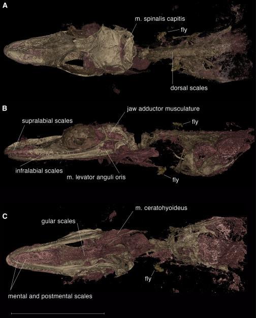 Menor dinossauro já encontrado é, na verdade, um outro animal