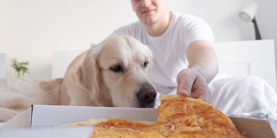 Um importante efeito colateral que o ganho de peso tem na saúde do seu cão, afirmam novos dados